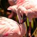 Flamingo Friday '19 10