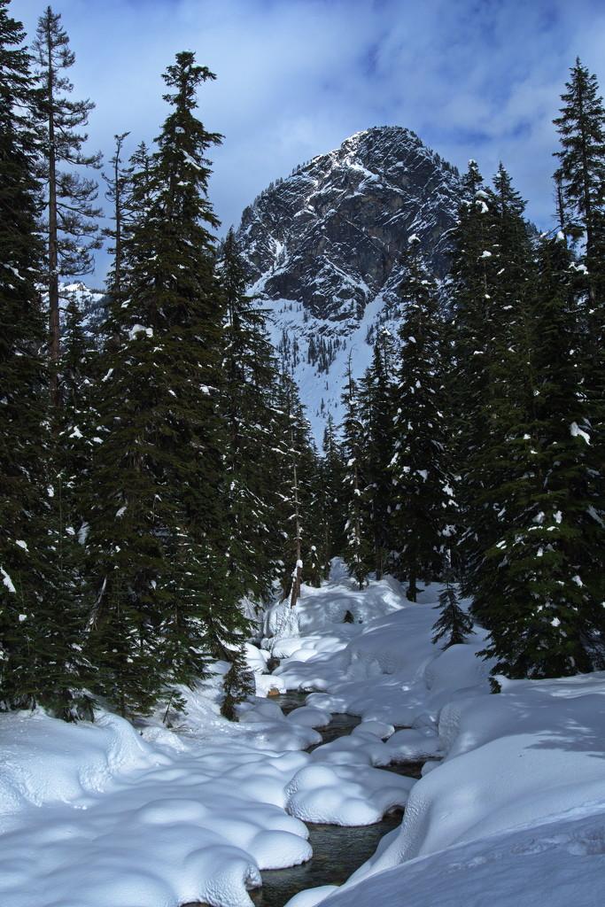 Winter wonderland by teriyakih
