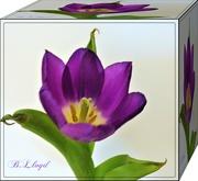 2nd Mar 2019 - Purple Tulip Cube