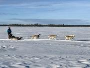 2nd Mar 2019 - Finnish Lapland Huskies