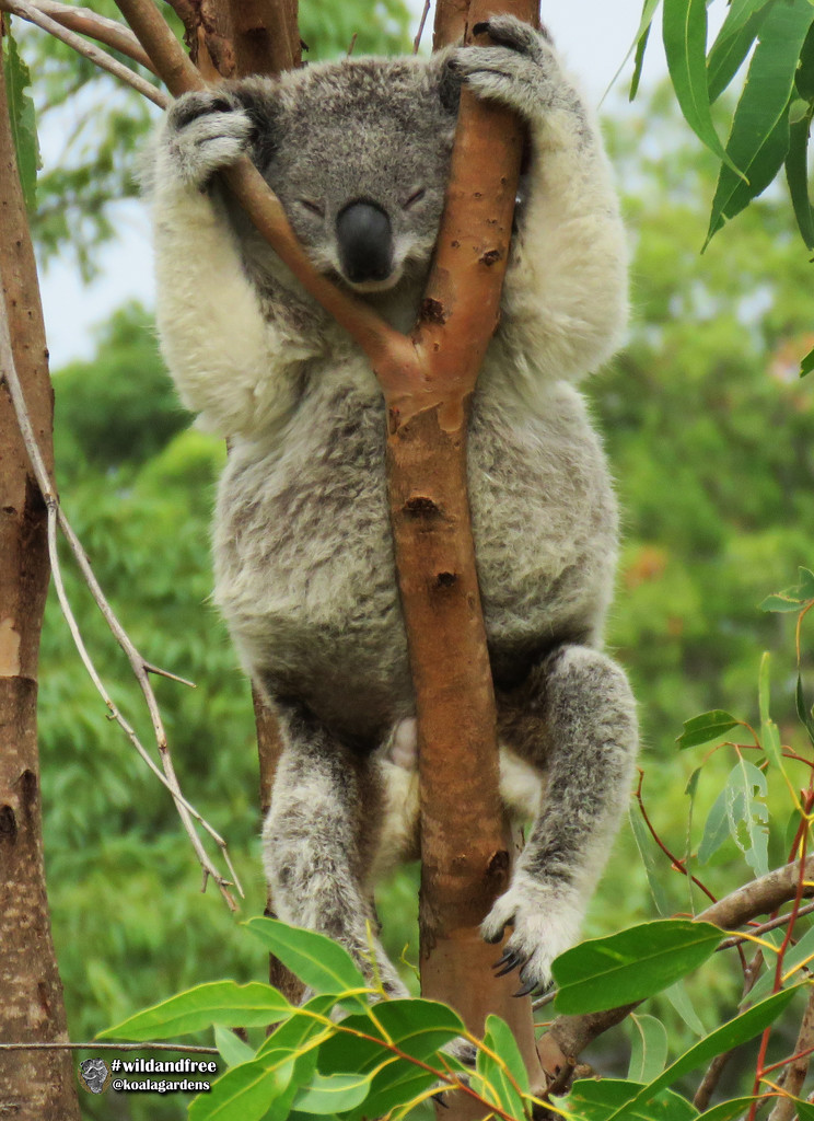 well hung ... by koalagardens
