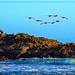Pelicans Take Flight