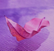 3rd Mar 2019 - Rainbow Month - Violet Leaf