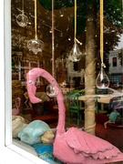 3rd Mar 2019 - A Friday Flamingo for the Rainbow Pink Sunday
