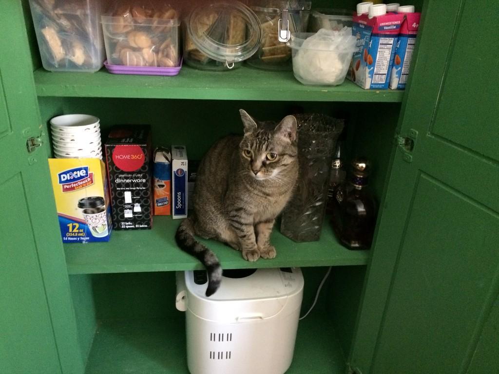 Inspecting the pantry by joansmor
