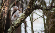3rd Mar 2019 - Hello little squirrel