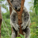 hangin loose by koalagardens