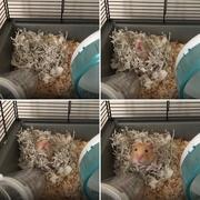 3rd Mar 2019 - Hammie's Nest