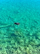 4th Mar 2019 - Crystal clear water.