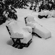 4th Mar 2019 - Mother Nature's cushions