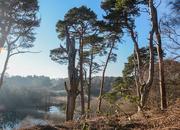26th Feb 2019 - Lound Lakes