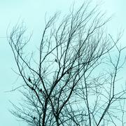 1st Mar 2019 - Birds in a tree