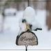 Snow Covered Bluebird by olivetreeann