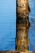 4th Mar 2019 - Tree in the water