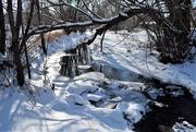 4th Mar 2019 - Spring Creek at Spring Park