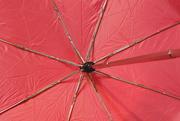 3rd Mar 2019 - Pink umbrella