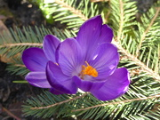 2nd Mar 2019 - Spring flower