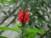 4th Mar 2019 - Red flower