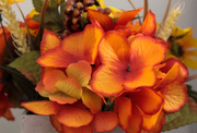 5th Mar 2019 - Orange  flowers orange