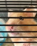 1st Mar 2019 - Cheeky hamster filler