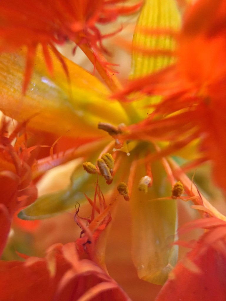 Orange by shutterbug49
