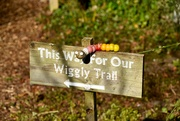 17th Feb 2019 - Wiggly Trail