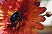 5th Mar 2019 - Orange Flower