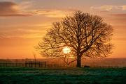 5th Mar 2019 - Big tree Little tree