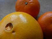 5th Mar 2019 - oranges / orange