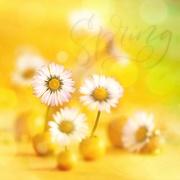 "6th Mar 2019 - 2019-03-06 Rainbow month ""yellow"" N° 1"