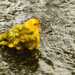 Saffron Finch Taking a Bath  by jgpittenger