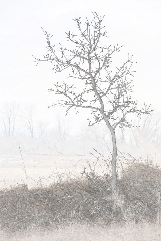 tree portrait pencil by rminer