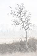 6th Mar 2019 - tree portrait pencil