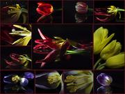 5th Mar 2019 - Beautiful Tulips