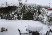 22nd Feb 2019 - Still Snow