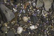 8th Mar 2019 - Loving seashells...
