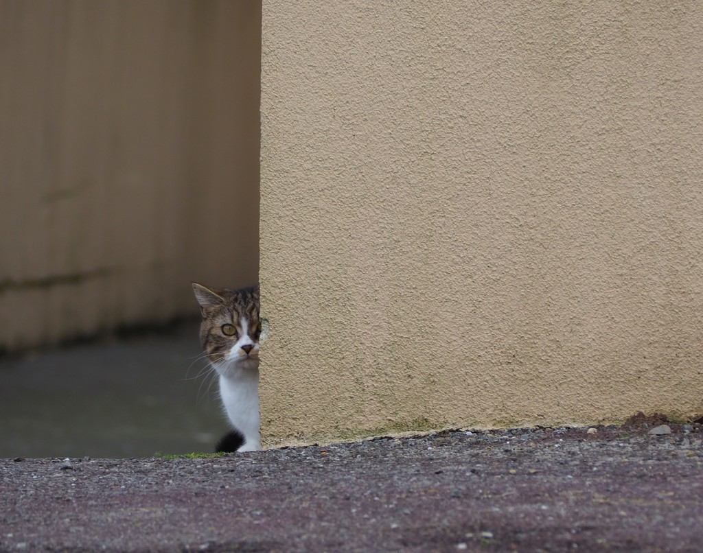 Who goes there? by s4sayer