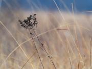 8th Mar 2019 - prairie landscape