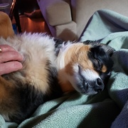8th Mar 2019 - Happiness is a Belly Rub