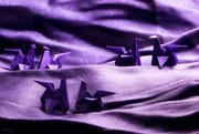9th Mar 2019 - Purple - day 9