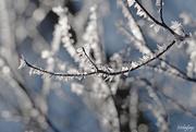 9th Mar 2019 - Frosty morning magic!