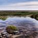 Marsh Rock Pool.Jpg