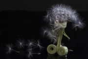 9th Mar 2019 - Amazing how a dandelion stem curls!