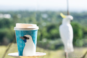8th Mar 2019 - Coffee with a Cockatoo
