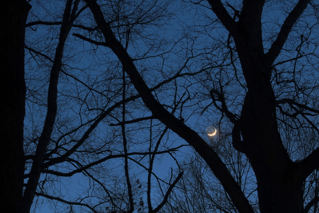 Moon Silhouette by tdaug80