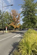 10th Mar 2019 - Streets of Canberra - Constitution Avenue