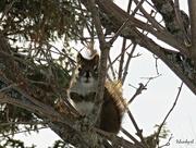 9th Mar 2019 - Squirrel Look