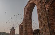 11th Mar 2019 - Qutub Minar: pigeon paradise