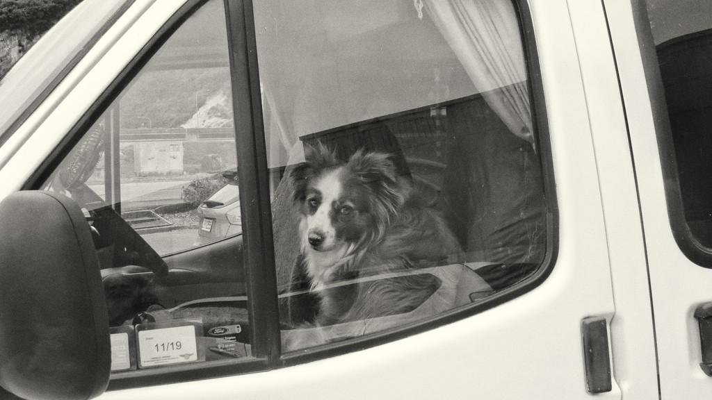 dogs in campervans by kali66
