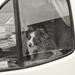 dogs in campervans